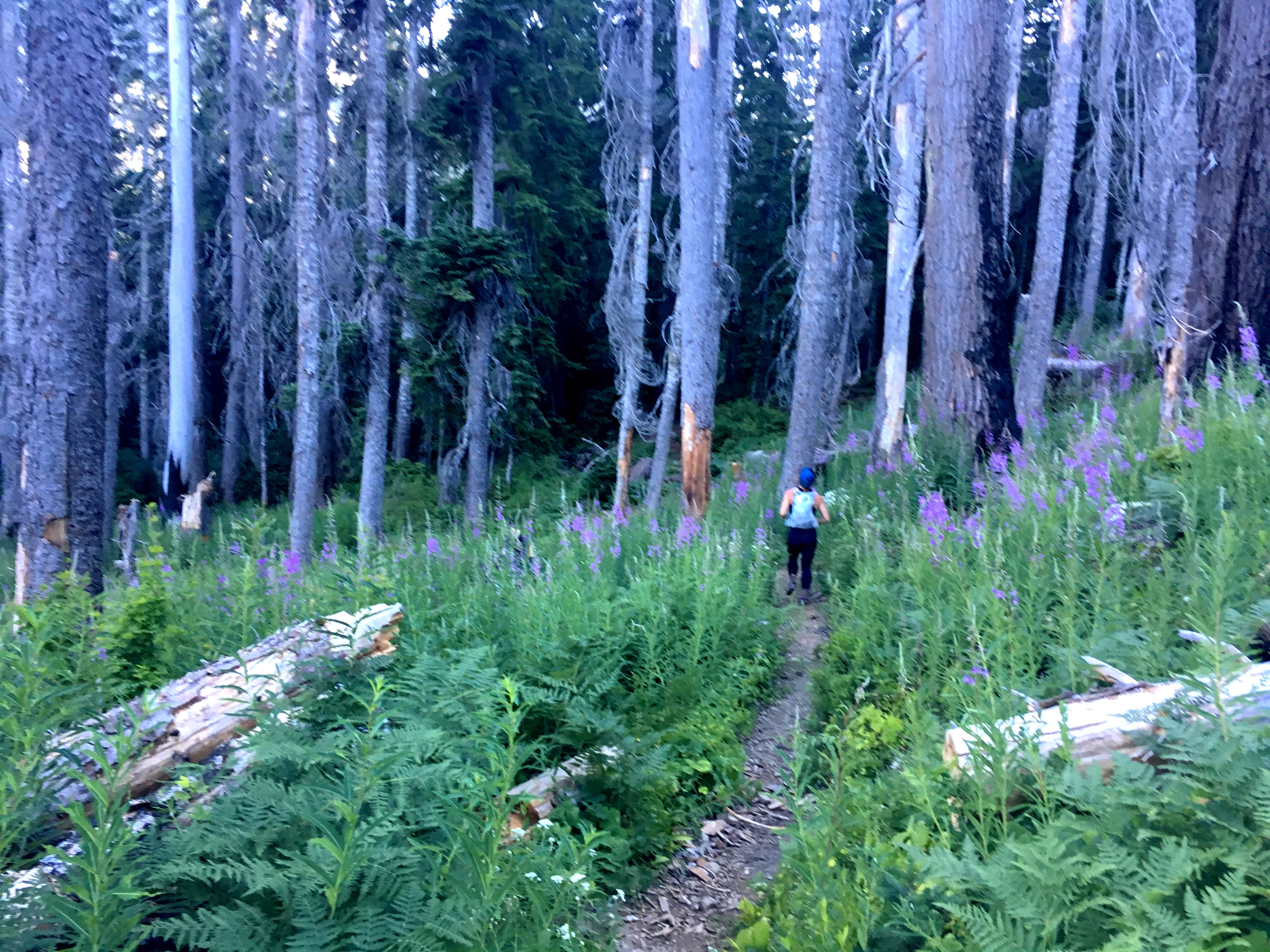 Running Through Delate Meadows on Stevens Pass to Snoqualmie Pass adventure