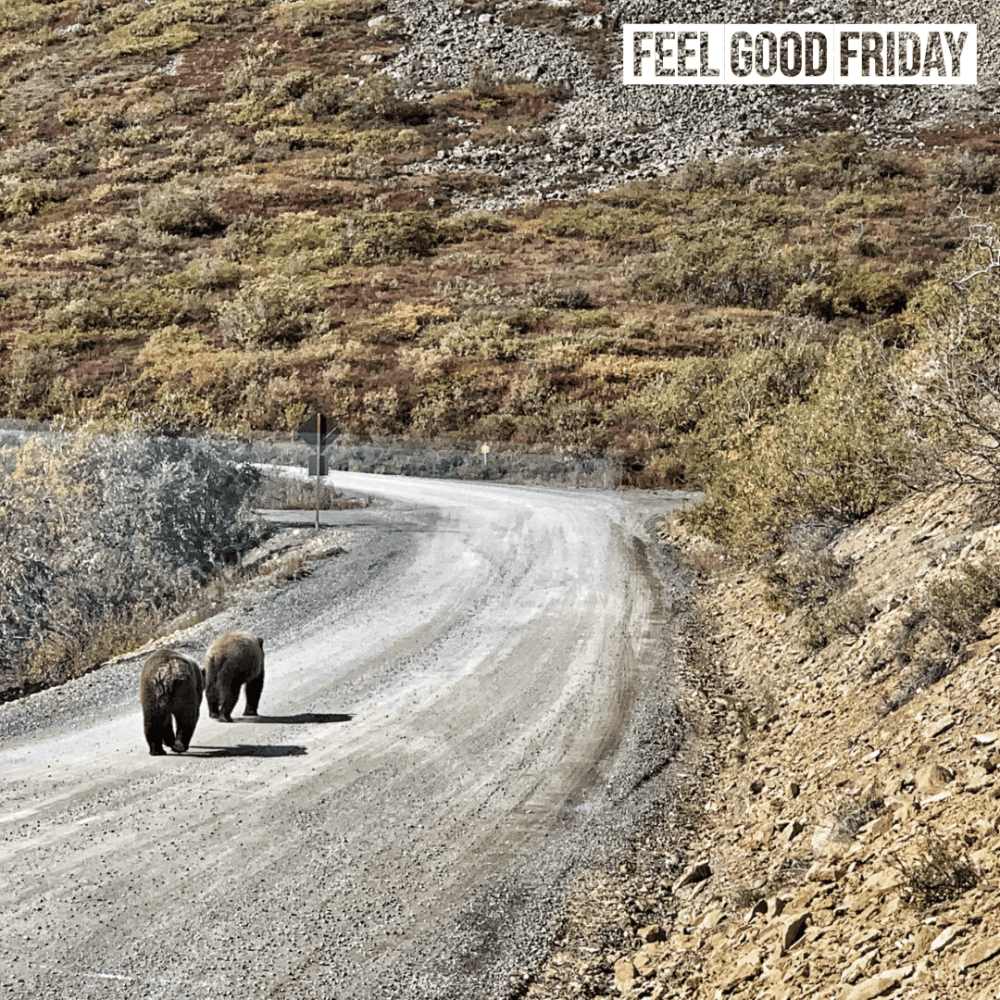 Feel Good Friday – Grizzly Bears – Toasted Quads